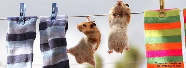 "<img src=""http://2.bp.blogspot.com/-Enl5aalRXkg/Ue1eF_aP-6I/AAAAAAAACzQ/pwjEifpBfBw/s1600/hamsters_hanging-2823.jpg"" alt=""Animal Facebook Covers"" />"