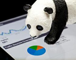 How To Recover From Panda, Panda Recovery