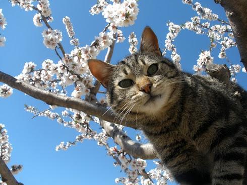 Tita nos apresenta a primavera!
