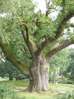 Moyles Court Oak near Rockford
