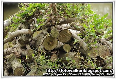 米埔自然保護區