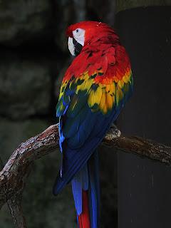 Macaw Duplicate; Mode Burn; Opacity 50%