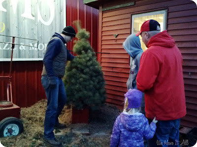 Abbey Farms Christmas Trees