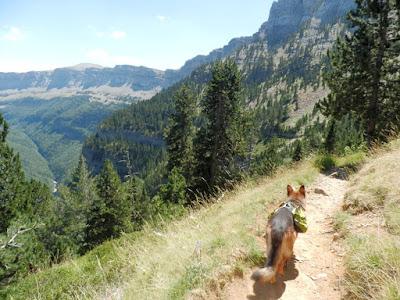 Monte-perdido-con-perro-cola-de-caballo-goriz-pirineo
