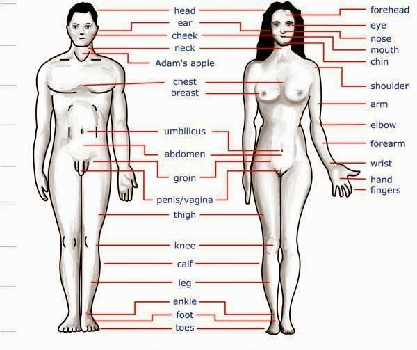 Man And Woman Body Parts Man And Woman Body Parts