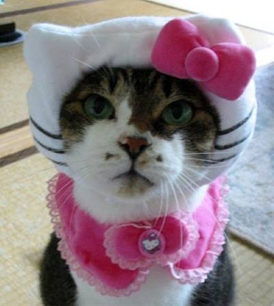 Cute little kitten wearing fancy dress for pets party