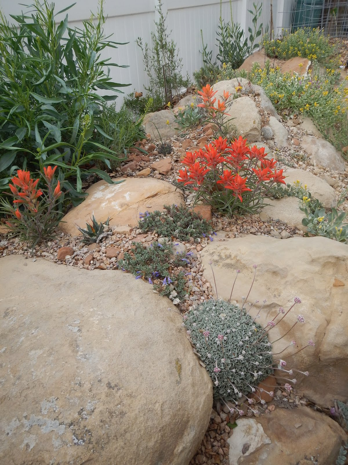 Paintbrush Gardens LLC NATIVE LANDSCAPES Xeriscapes
