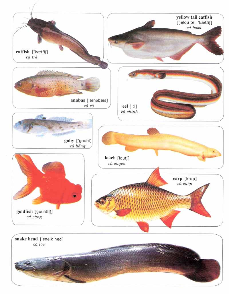 Learning vocabulary with pictures fish and sea animals 1 for 7 fishes list
