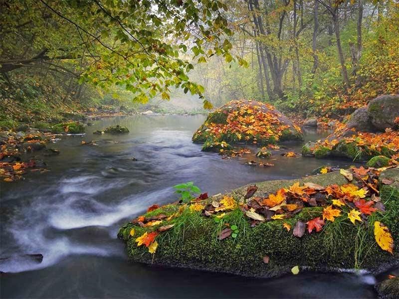 Paisaje de otoño, Olegas Kurasovas