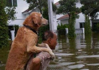 A man caring dog as son funny picture