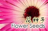 Buy Flower Seeds Online 网购花种子