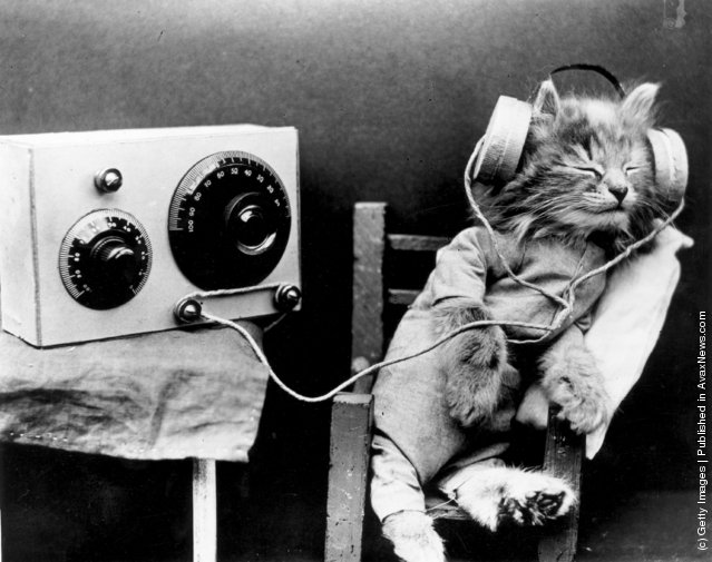 Кошка слушает радио в наушниках. (Январь 1926 г.)