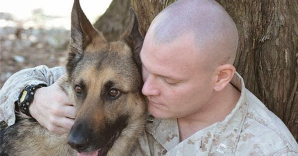 Ptsd Service Dog Training Las Vegas
