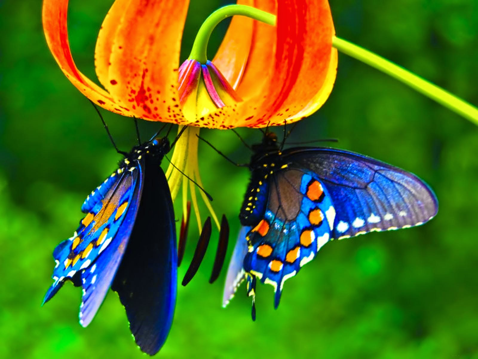 3D <b>Butterfly Desktop</b> Backgrounds | <b>Wallpaper</b> view