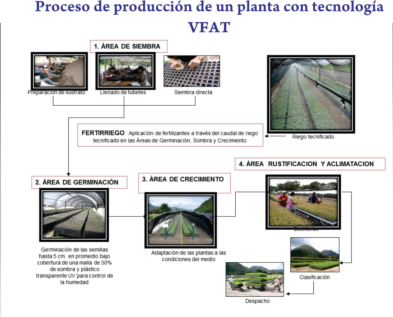 Vivero forestal de alta tecnologia septiembre 2011 for Como disenar un vivero