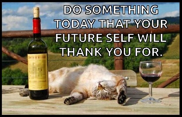 meme cat future self funny drunk passed out cat