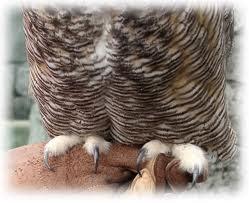 Bentuk kaki Burung Hantu di info-faktaunik.blogspot.com