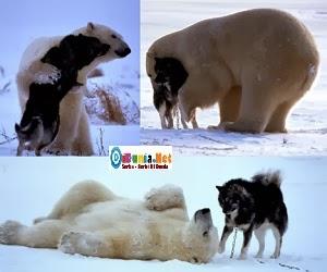 Binatang terbesar didunia