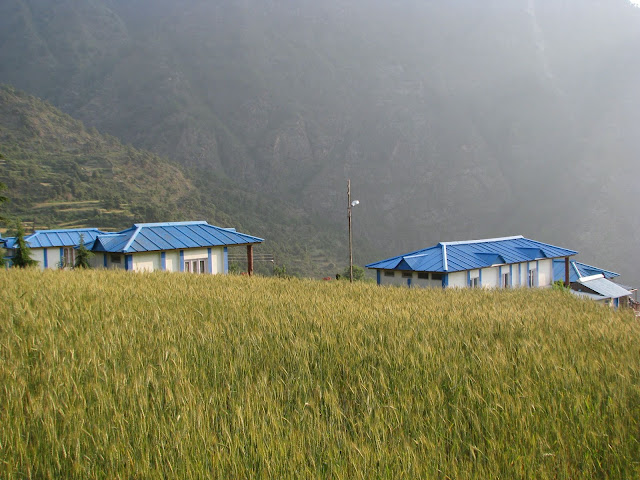 Dayara Resort against wheat field in the morning
