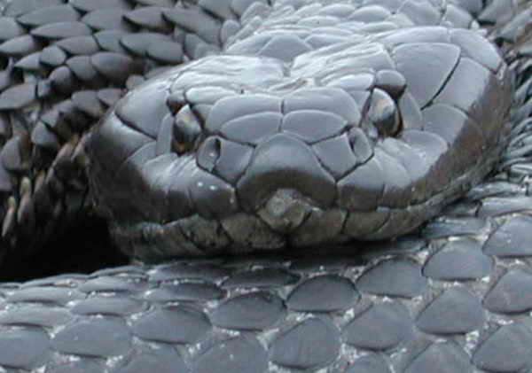 snakes in the world world top 12 poisonous snakes