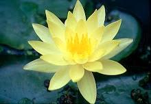 http://2.bp.blogspot.com/-ErywCf3Ddd4/UtyiaiRXKbI/AAAAAAAAGgU/AdRR5UP9qM4/s1600/lotus2_c14.jpeg