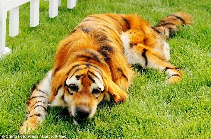 foto-foto anjing lucu
