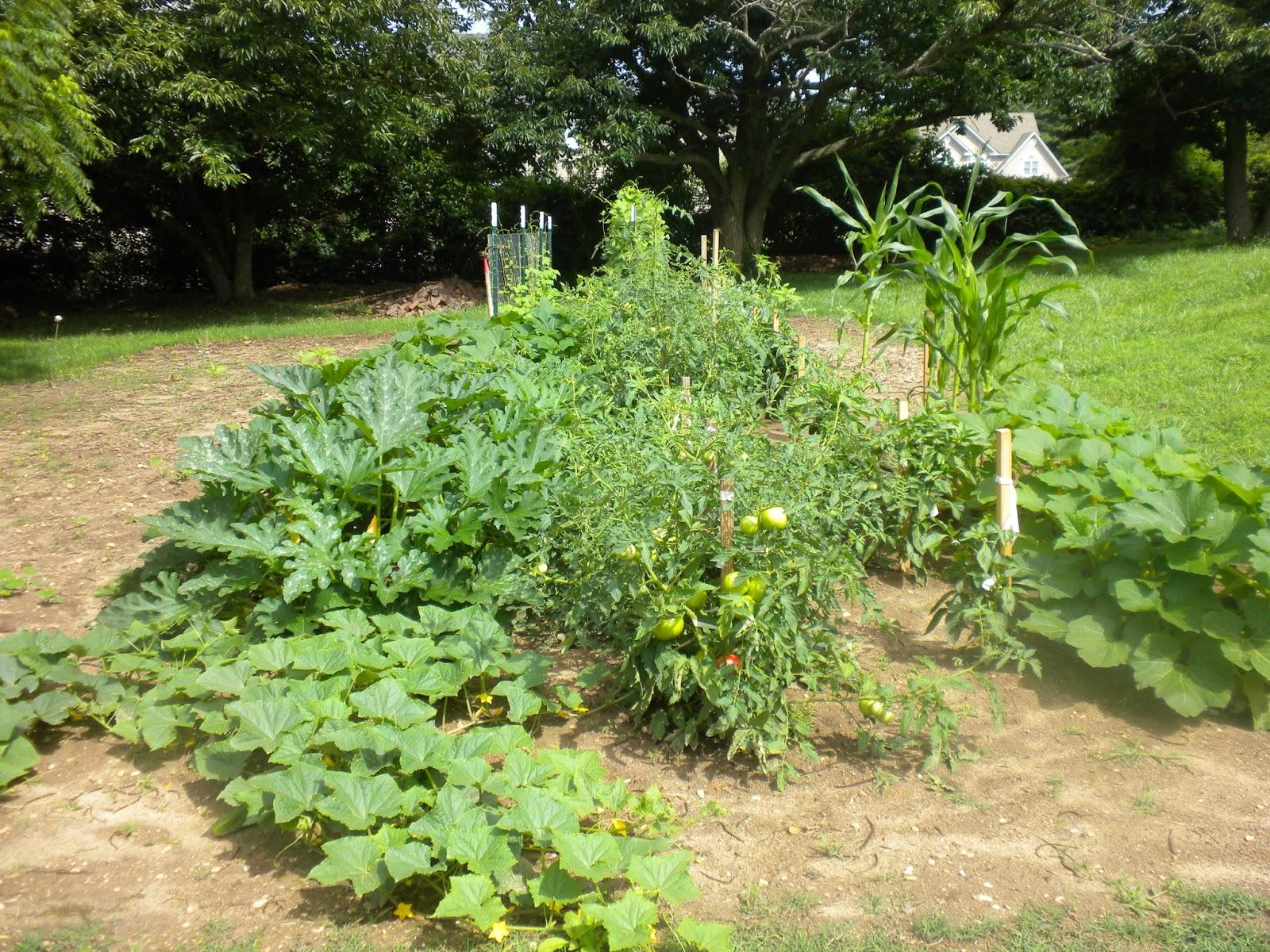 follower of christ 39 s blog fall vegetable garden