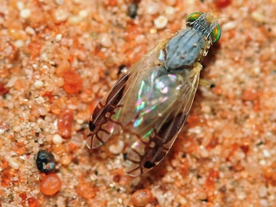 ALLPE Medio Ambiente Blog Medioambienteorg  Una mosca de la
