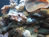 giant marine reef tank