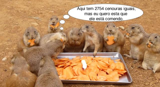 Cães-da-pradaria comendo cenouras