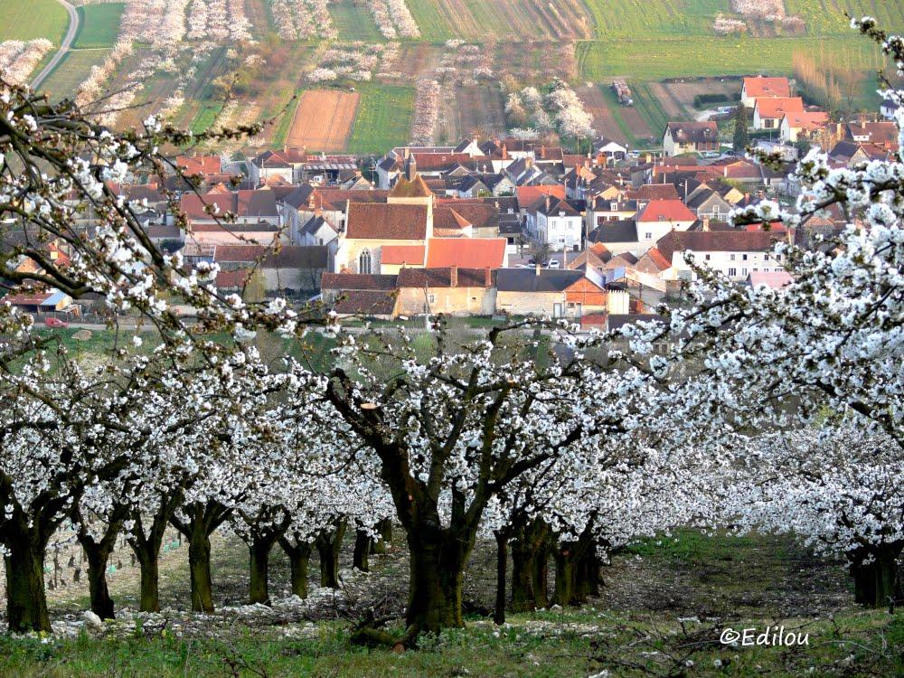 Jussy dans l'arbre, Jussy in the cherry-trees, ЖЮССИ НАД ЧЕРЕШНЯМИ