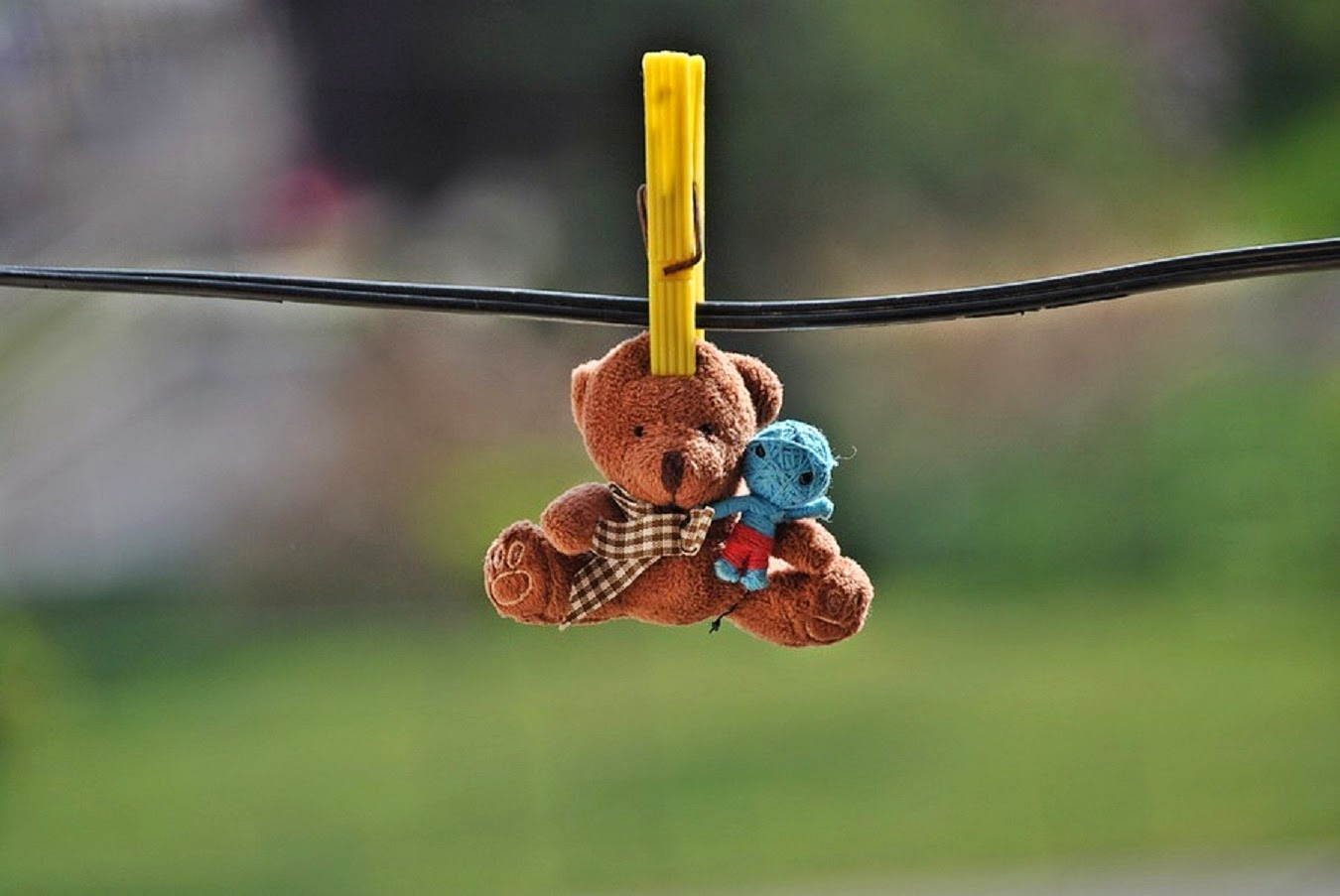 Teddy-clipped-hanging-with-cute-friend-1350x903.jpg