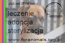 Przekaż 1% podatku na fundację For Animals
