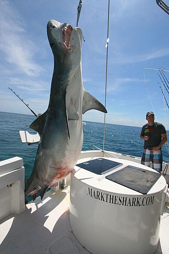 International Fishing News 2012 01