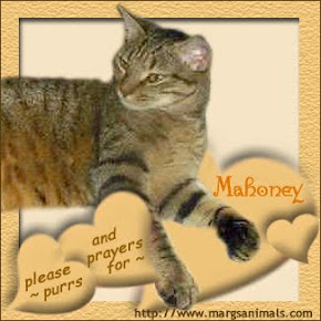 Sweet Mahoney we love you