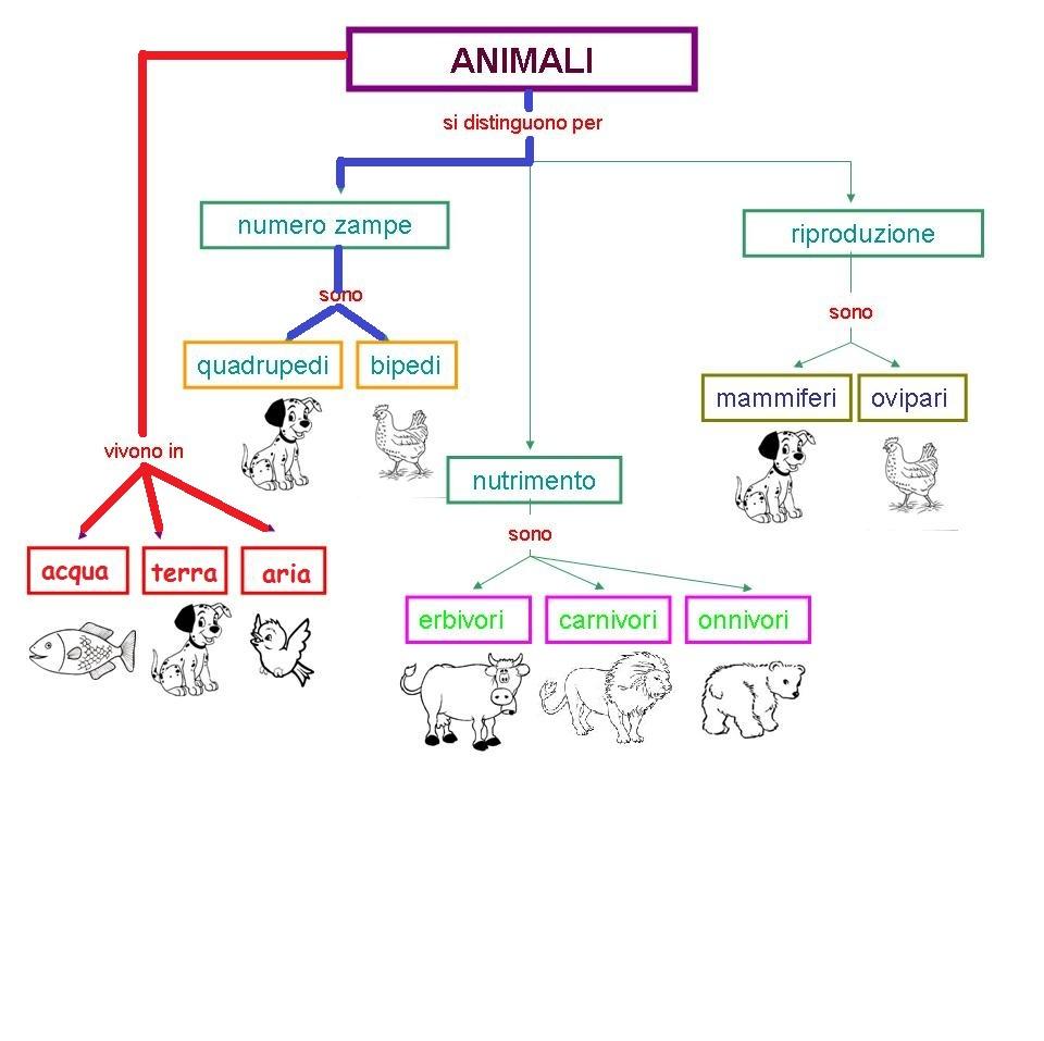 Lumachina ea mappa sugli animali for Mammiferi che vivono in acqua
