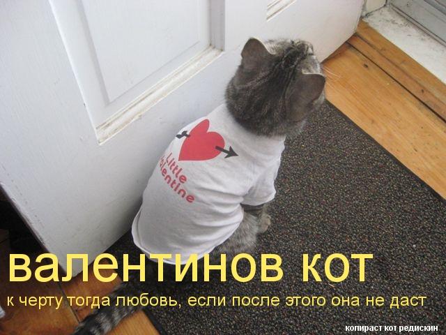 Валентинов день - кот нарядился на день святого валентина