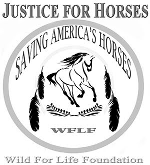 Justice For Horses