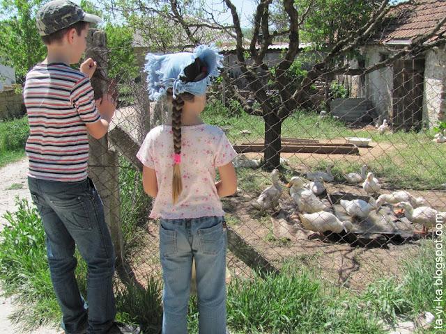 село Тополи - утята