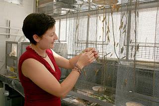 Arianne Cease, Penelitianya Tentang Data Modern Menghentikan Serangan Belalang