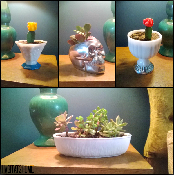 Cactus and Succulents in Upcycled Color Dipped Planters