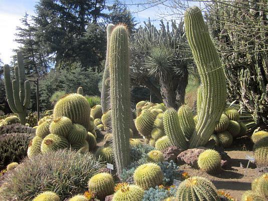 Huntington Botanic Gardens, Desert Garden, Cacti, Succulents
