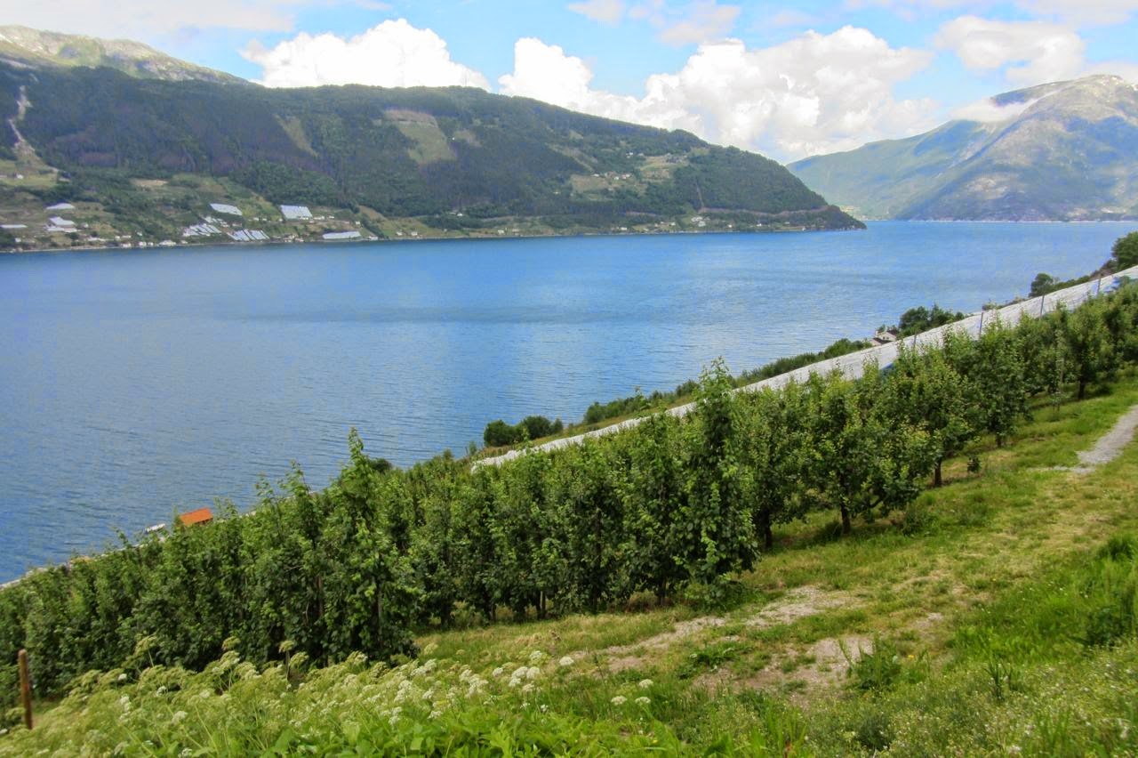 Noorwegen fruitbomen langs weg nr 13