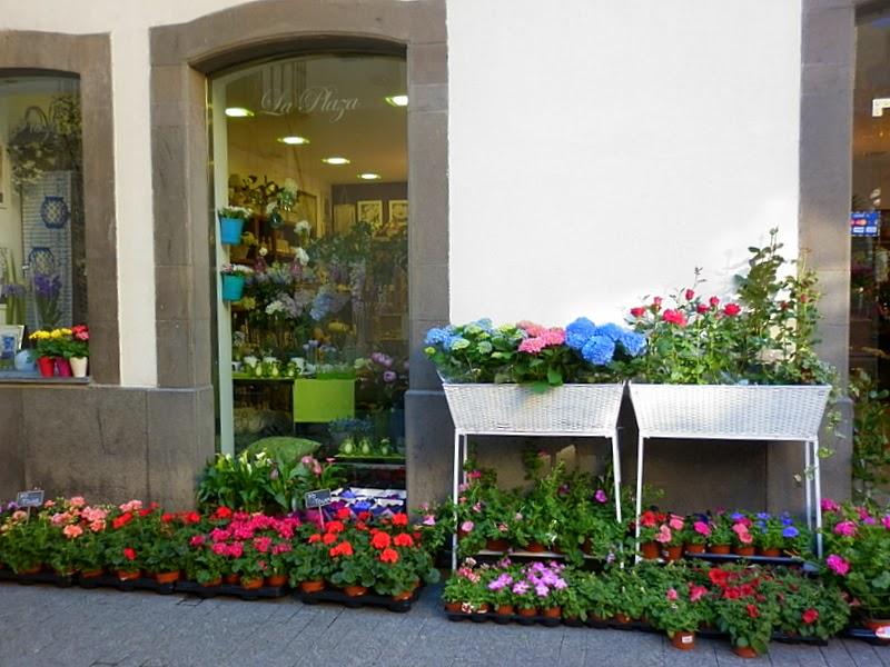 Flores y Plantas en Floristería la Plaza