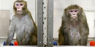 Ternyata Monyet Juga Bisa Menyesal !! dari daniel maulana