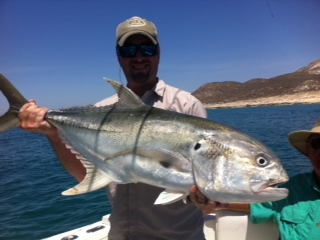 Baja anglers giant roosterfish invade cabo again for Rooster fish cabo