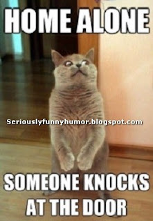 Cute Cat - Home Alone, someone knocks on door!