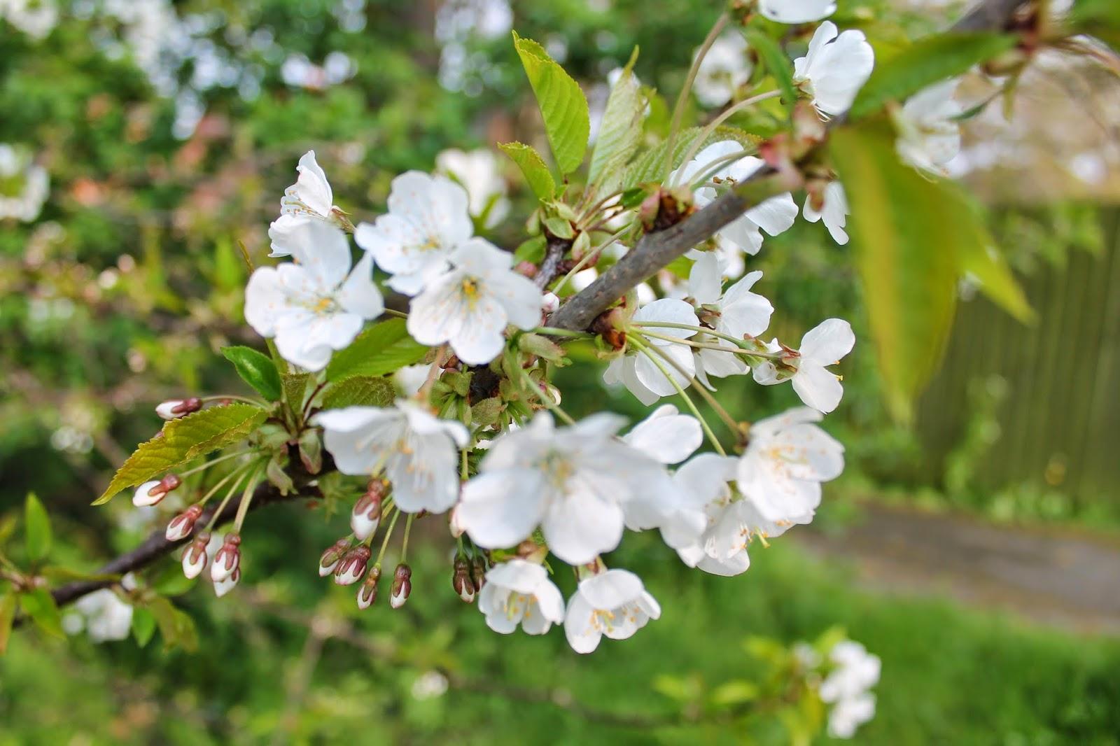 blossom via lovebirds vintage