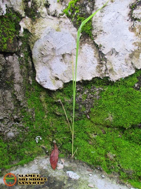Lumut Tumbuh Di Dinding
