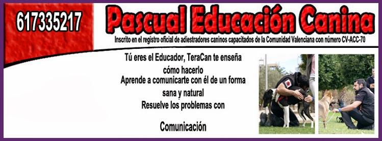 Tera-Can (Pascual Educación Canina en Alicante)
